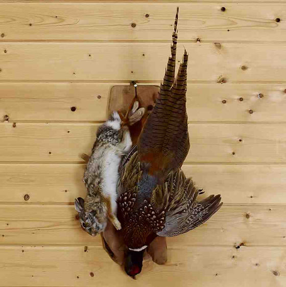 Rabbit and Pheasant Taxidermy Mount for Sale