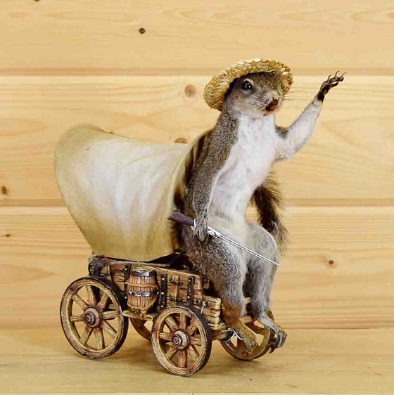 Pioneer Squirrel Taxidermy