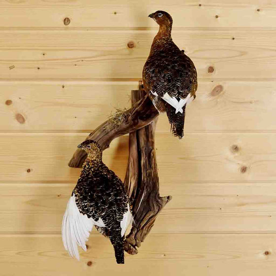 Ptarmigan Taxidermy Mount for Sale