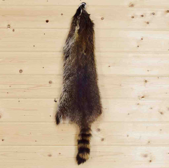 Raccoon Fur for Sale