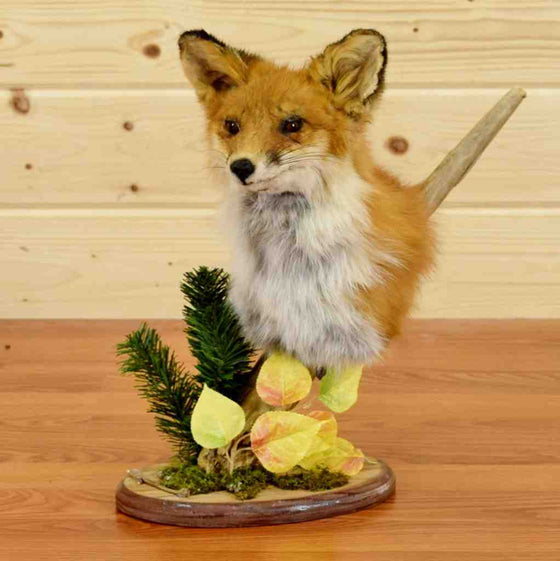 Red Fox Head Pedestal Taxidermy Mount for Sale