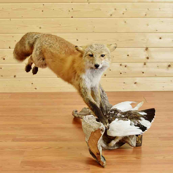 Red Fox and Ptarmigan Taxidermy Mount for Sale
