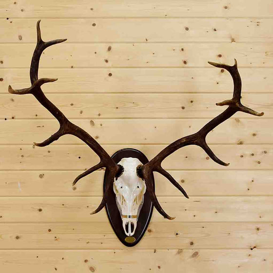Red Stag Euro Mount