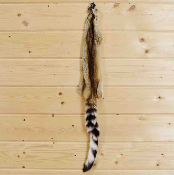 Ringtail Cat Fur