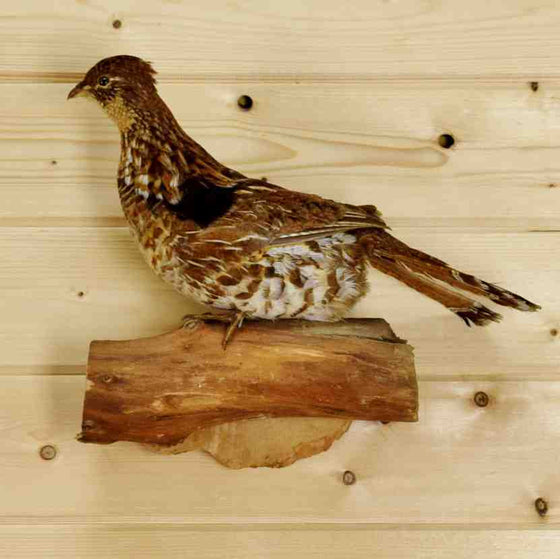 Grouse Taxidermy for Sale at Safariworks