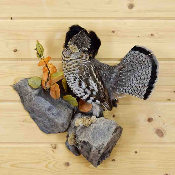 Ruffed Grouse Taxidermy
