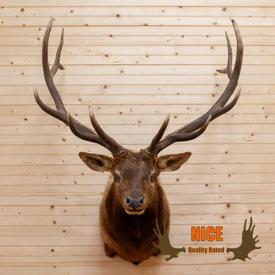 Elk Taxidermy Mount 6X6 - SW10002