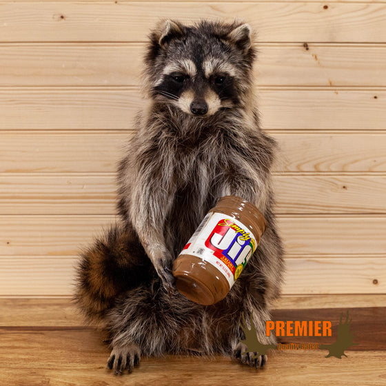 novelty rull body lifesize taxidermy raccoon with peanut butter