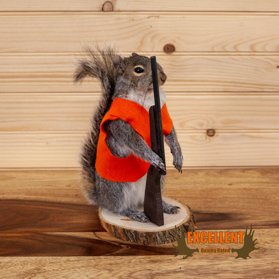 hunting hunter squirrel full body taxidermy mount for sale