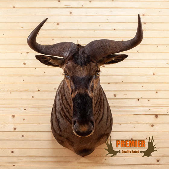 Premier African Nyasa Wildebeest Taxidermy Shoulder Mount SW10498