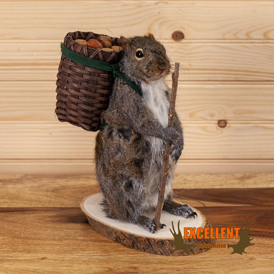 hiker squirrel novelty taxidermy mount for sale