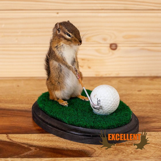 novelty golfing chipmunk taxidermy mount for sale
