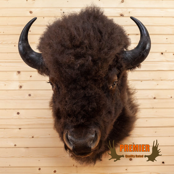 american bison taxidermy shoulder mount for sale