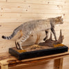 Excellent African Wildcat Full Body Mount SW10629