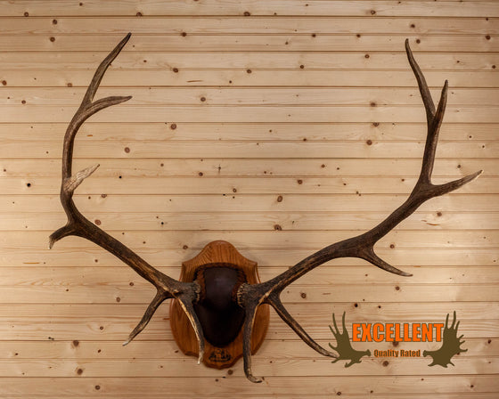 elk antler european mount for sale