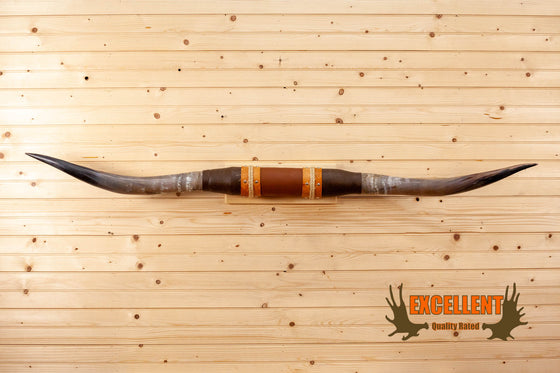 longhorn steer horns western mount for sale