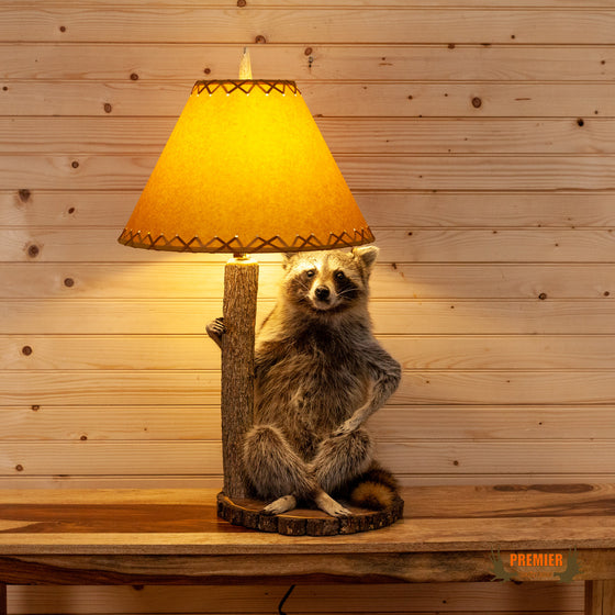 raccoon taxidermy lapm for sale