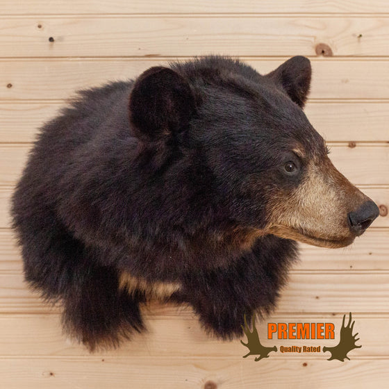 black bear taxidermy shoulder mount for sale