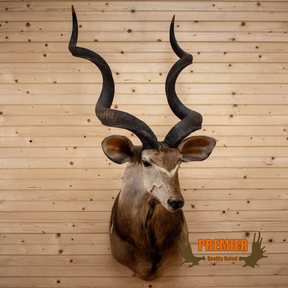 african kudu taxidermy shoulder mount for sale