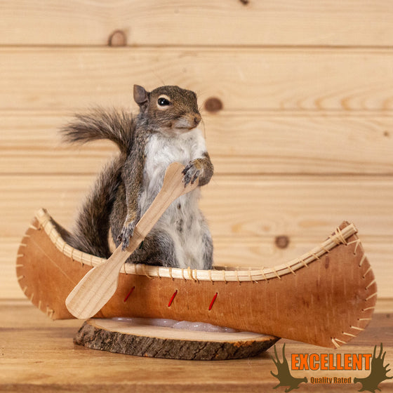 squirrel paddling canoe novelty taxidermy mount for sale