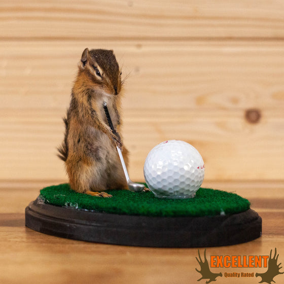 chipmunk golfing novelty full body taxidermy mount for sale