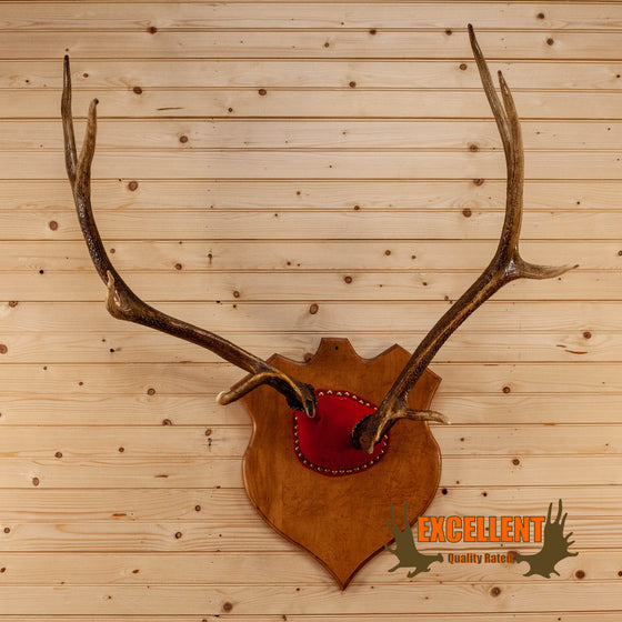 elk antler mount for sale