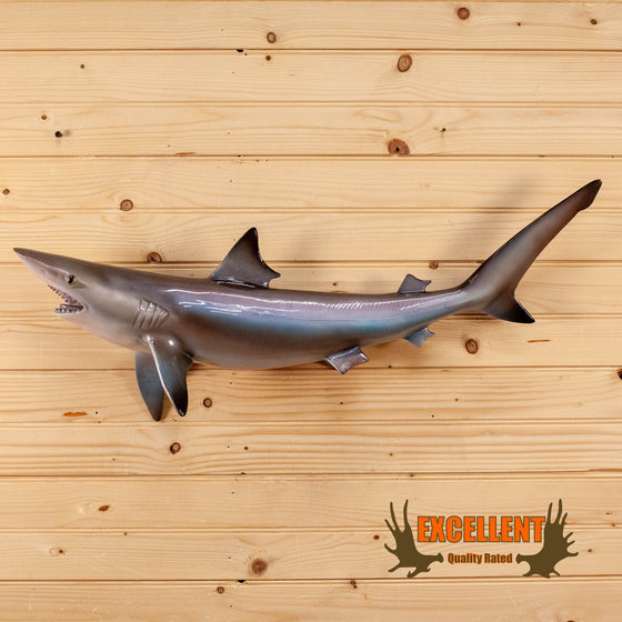 sand shark reproduction taxidermy mount for sale