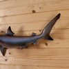 Excellent Reproduction Sand Shark Full Body Taxidermy Mount SW10831