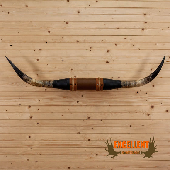 longhorn steer horns for sale