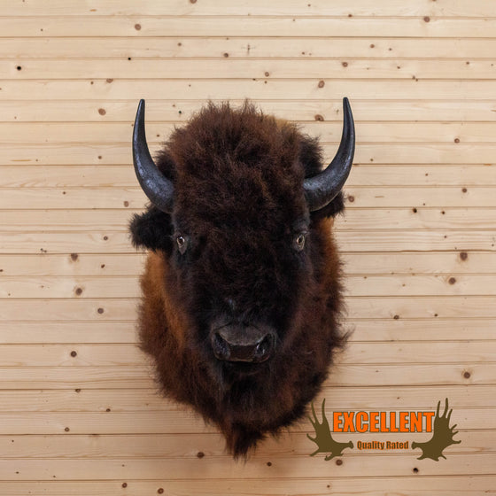 bison taxidermy shoulder mount for sale