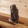 Bow Hunting Archer Squirrel Full Body Taxidermy Mount SW6365