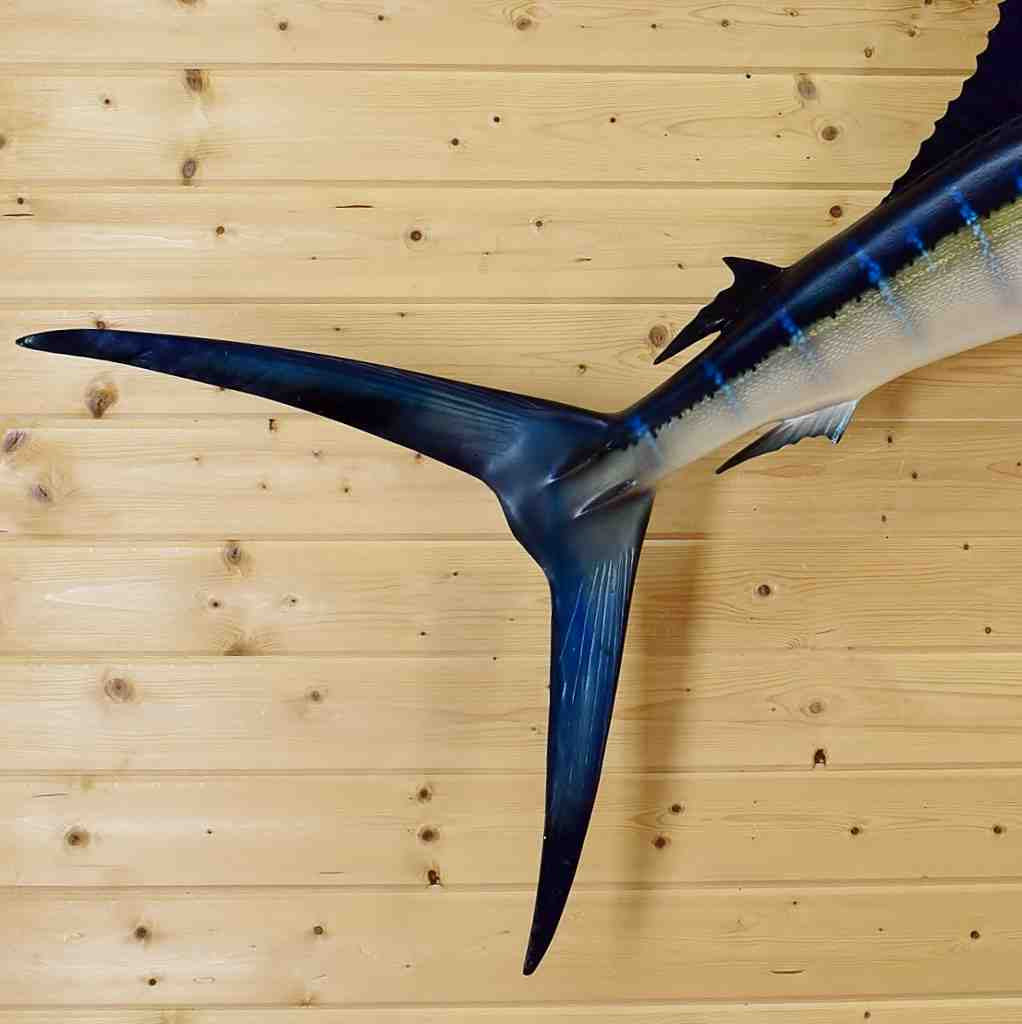 Sailfish Reproduction Mount - 9 ft - SW5362 - Safariworks Taxidermy ...