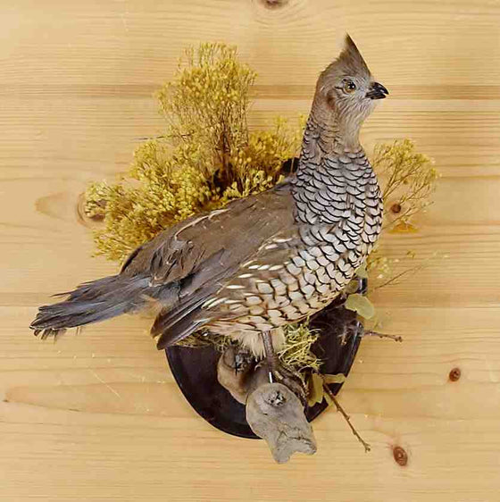 Scaled Quail Mounts