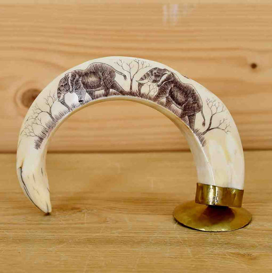 Hippo tusks for Sale