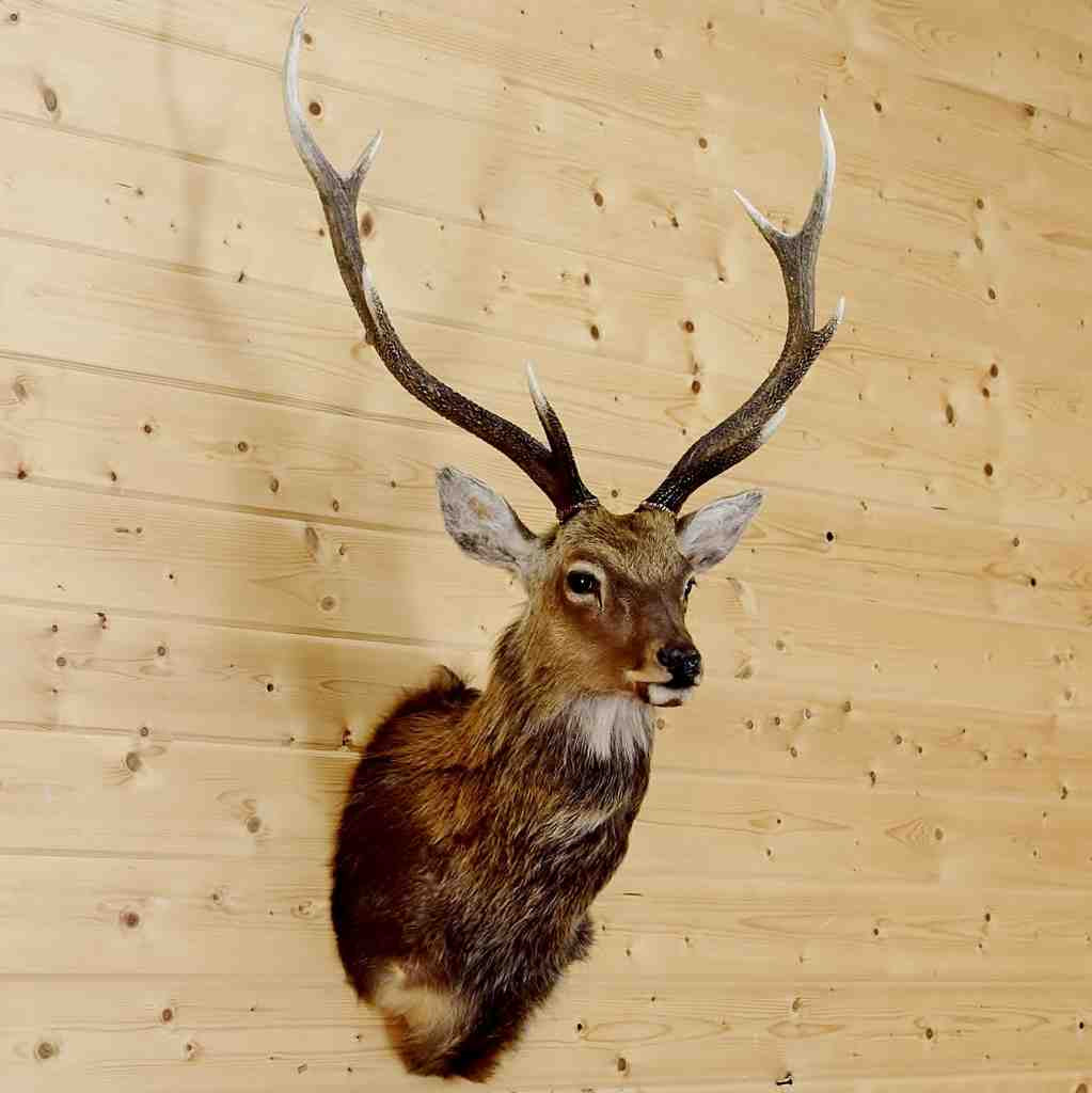 Perfect Plastic Deer Head Wall Decor Component - The Wall Art ...