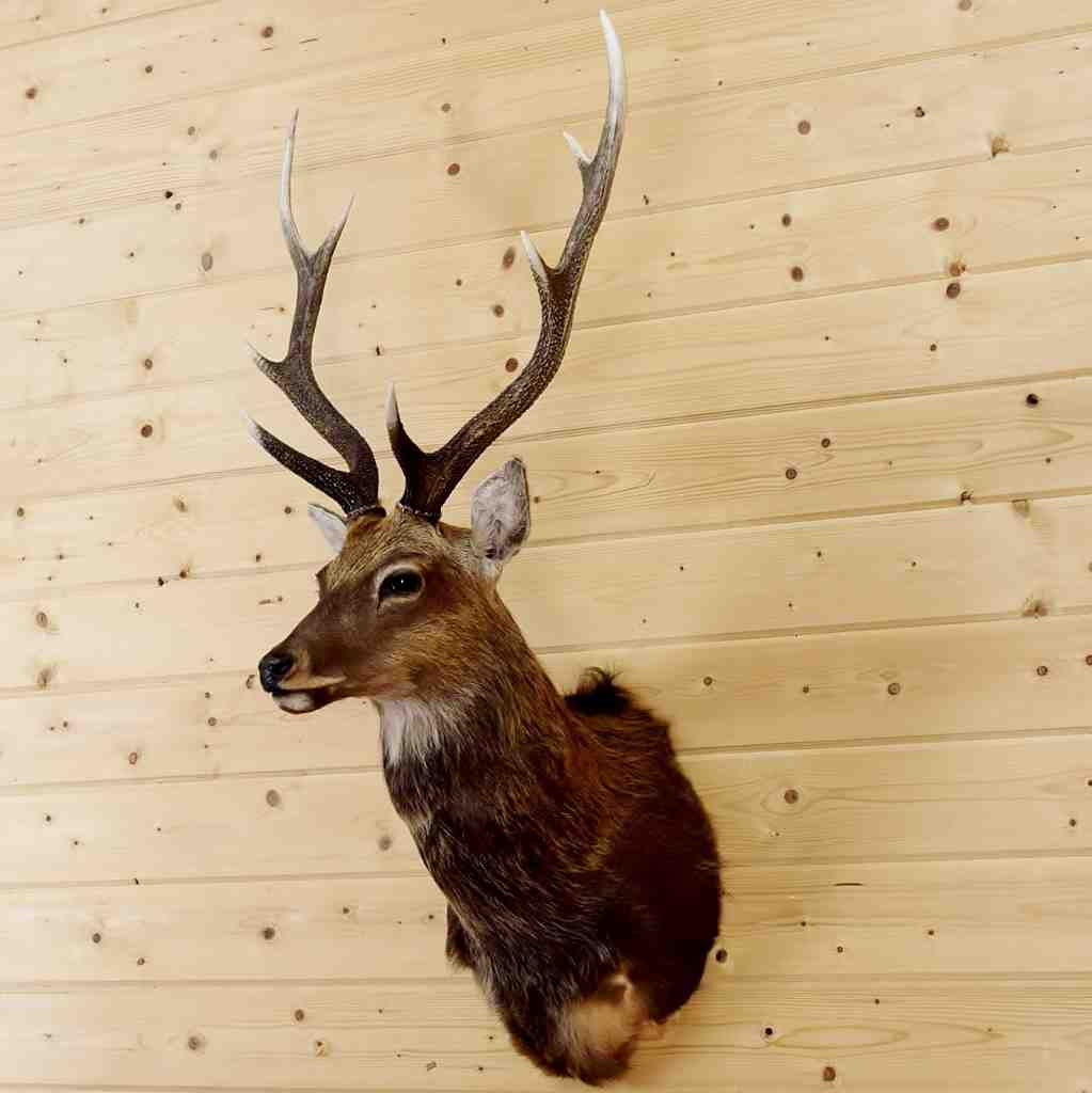 Awesome Stag Head Wall Decor Inspiration - The Wall Art Decorations ...
