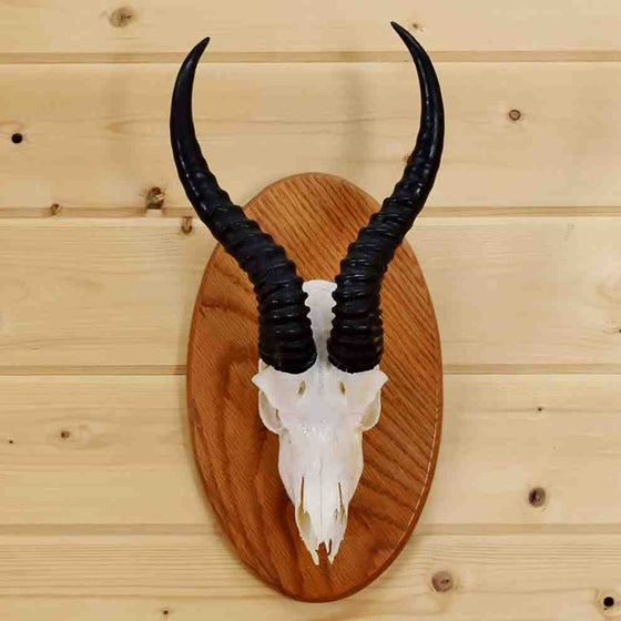 Springbok Euro Mount for Sale