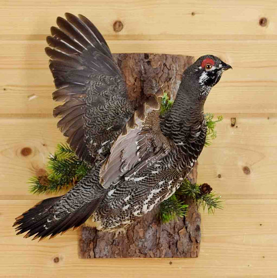 Taxidermied Birds for Sale
