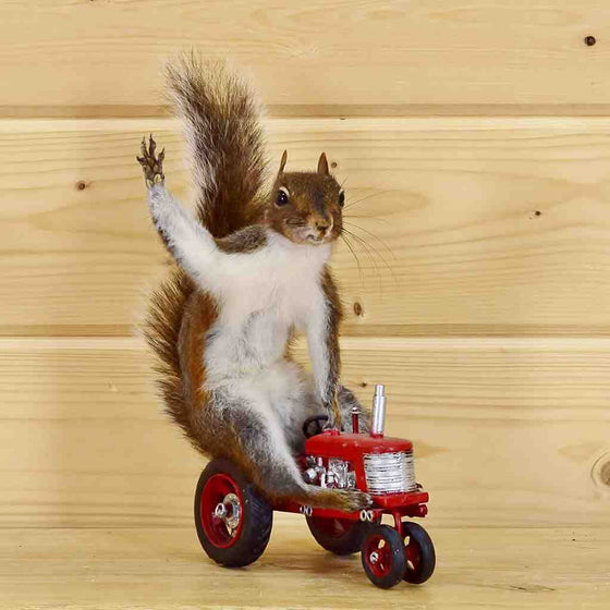 Tractor Squirrel Taxidermy