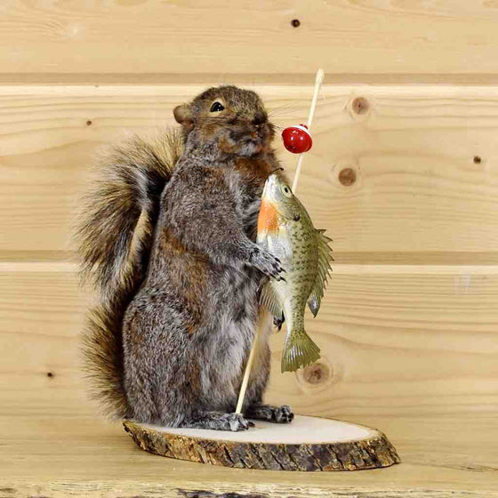 Fishing Squirrel for Sale