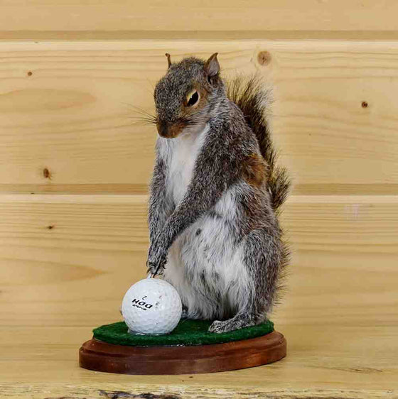 Golfing Squirrel Taxidermy