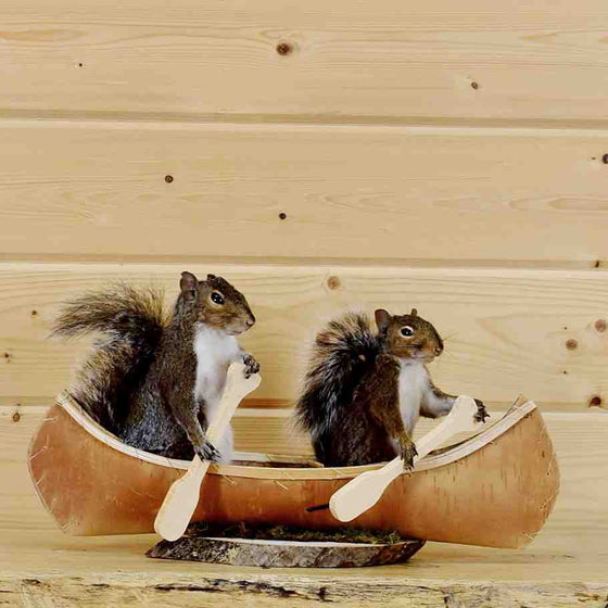 Squirrels in a Canoe Novelty Taxidermy Mount