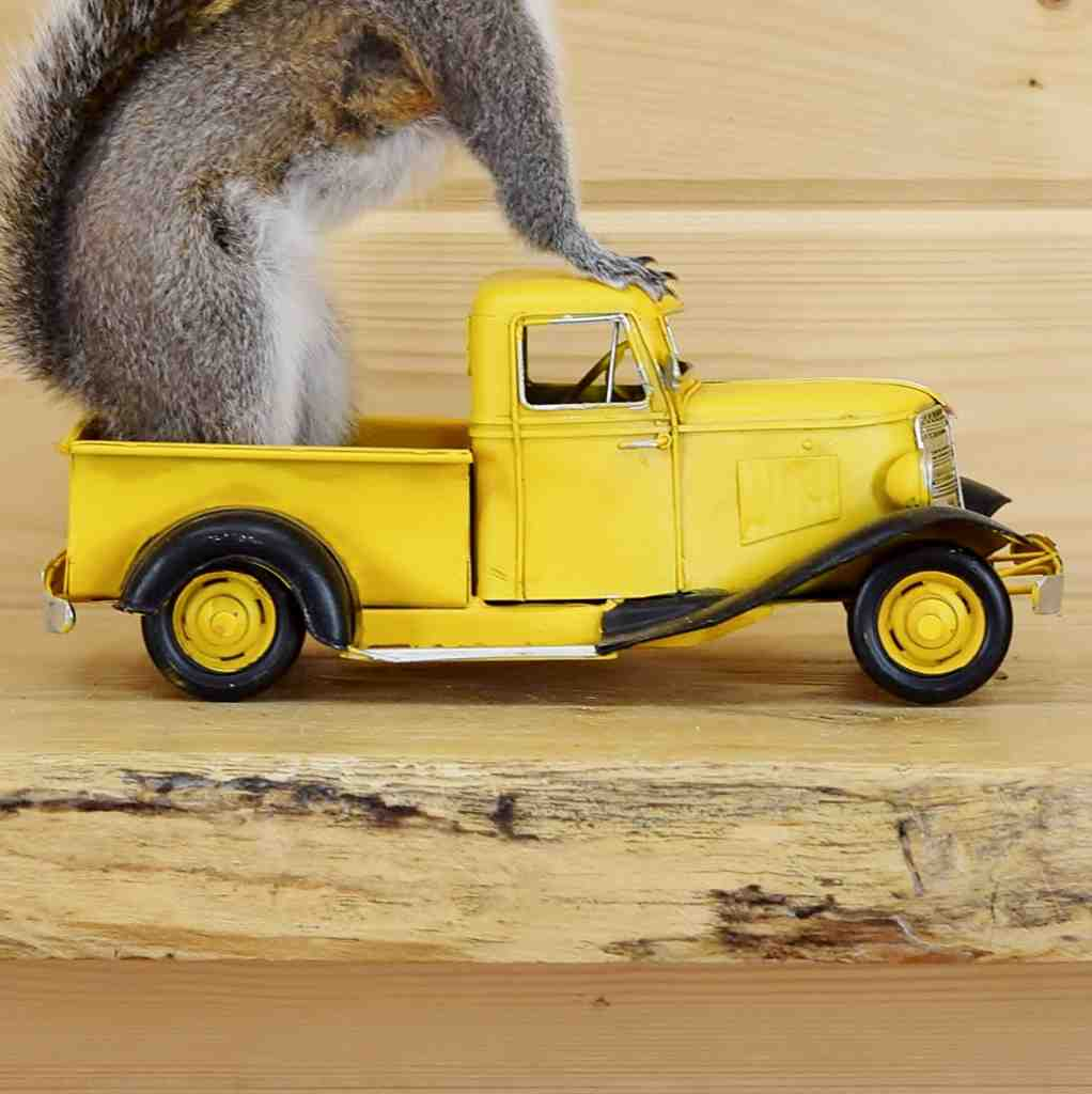 Truck Driving Squirrel Mount Sw4652 Safariworks Taxidermy Sales
