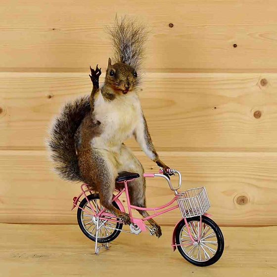 Biker Squirrel Taxidermy - Novelty and Gift Taxidermy