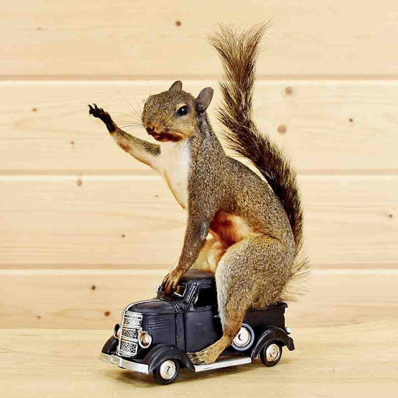Squirrel on Truck Taxidermy Mount for Sale