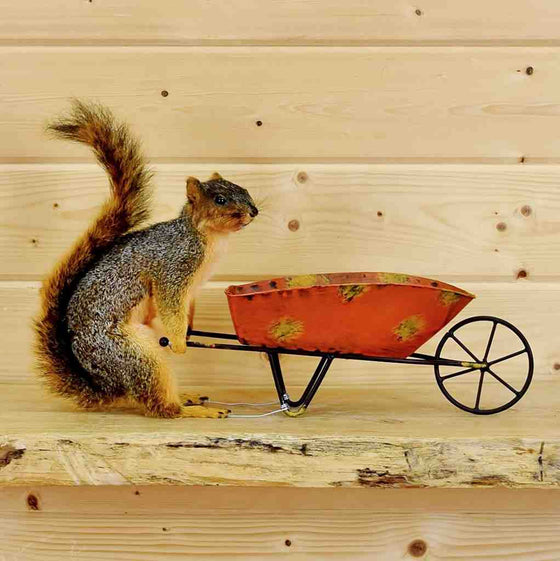 Squirrel with Wheelbarrow