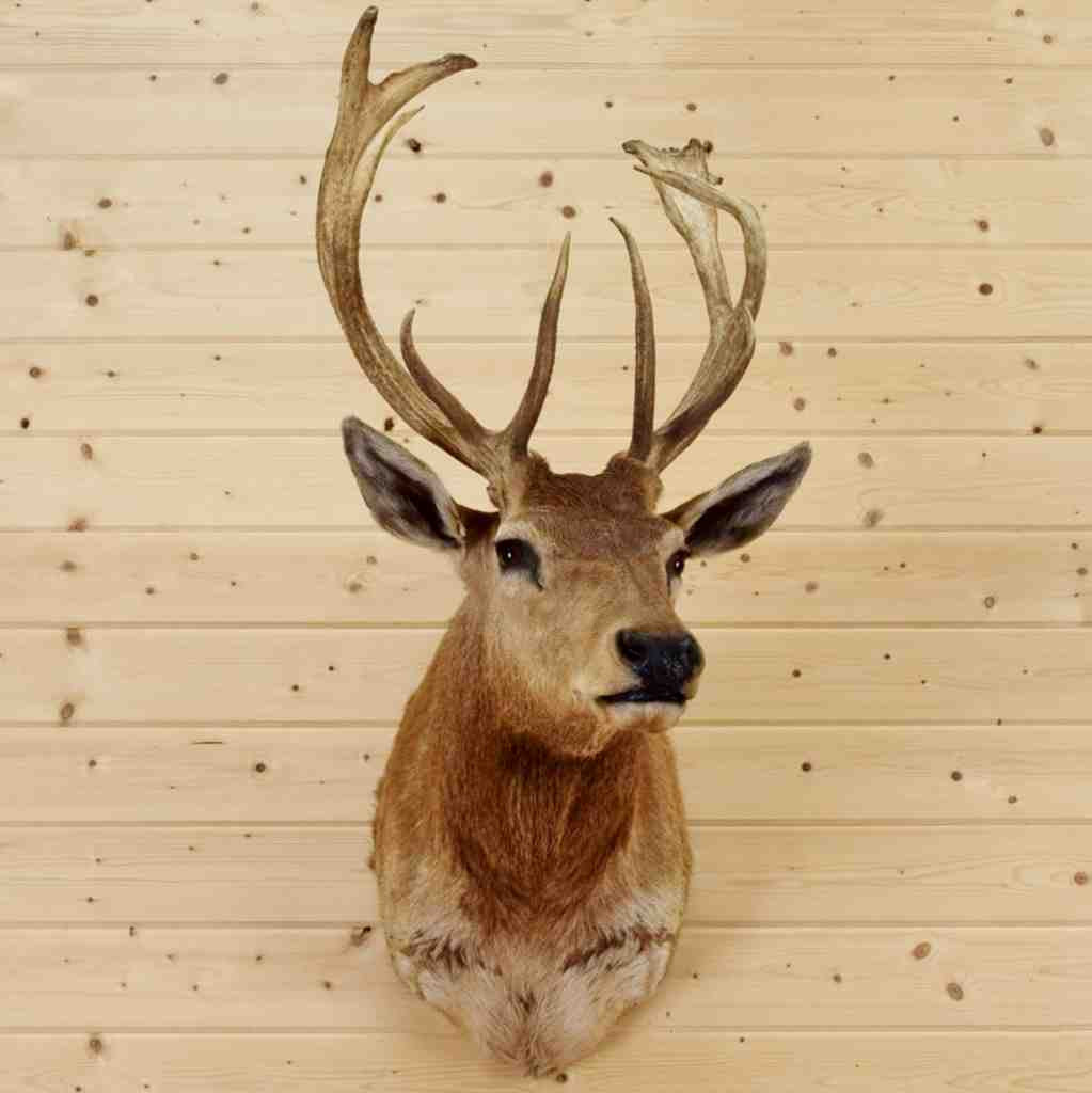 Outstanding Decorative Stag Head Wall Collection - Wall Art ...