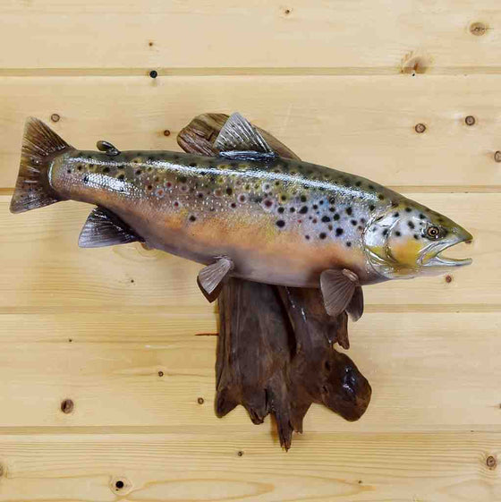 Real Skin Brown Trout Taxidermy Mount for Sale