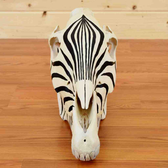 Painted Zebra Skull for Sale - SW9068