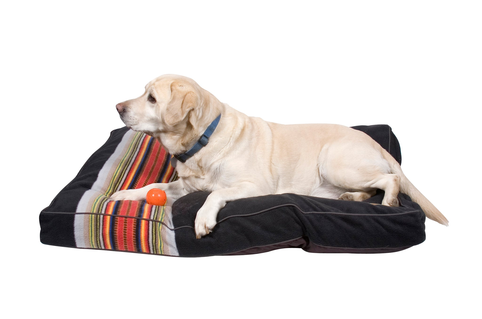 Acadia National Park Dog Bed